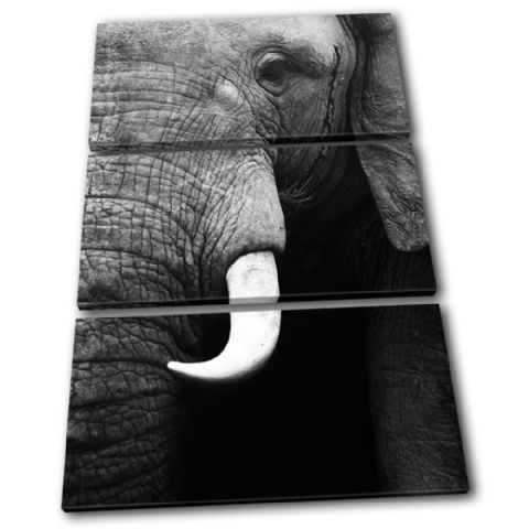Elephant Wildlife Animals - 13-1601(00B)-TR32-PO
